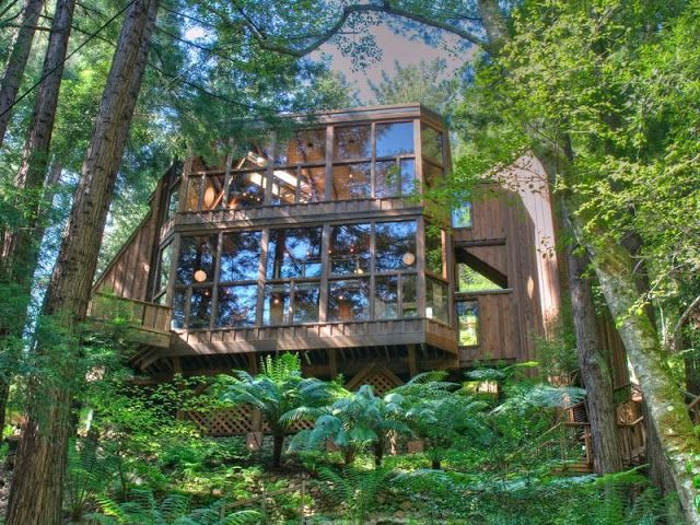 Future Tree Houses amazing home: tree house in the forest, mill valley, california