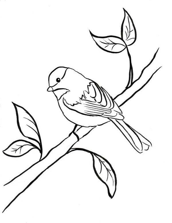 semillas de pino para colorear - Buscar con Google | dibujos ...