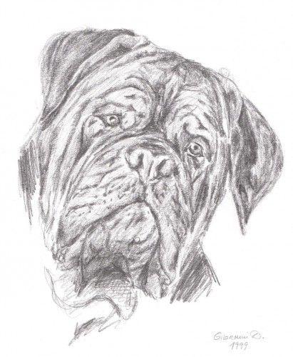 Dogue De Bordeaux History Dogo De Burdeos Amor Perruno Dibujos De Animales