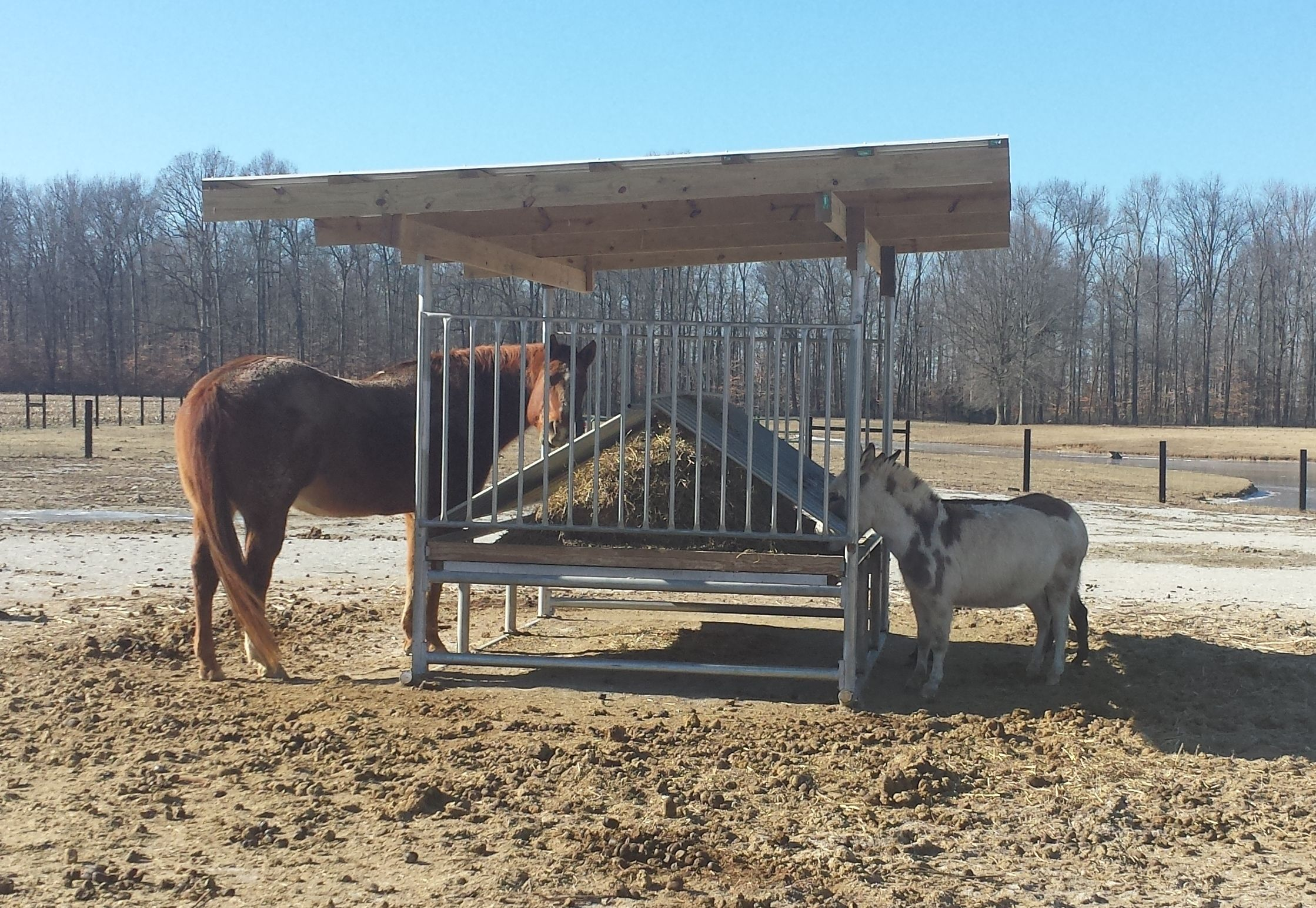 while hay in and the upcoming img new horse eating feeder events shade enjoy horses covered recent