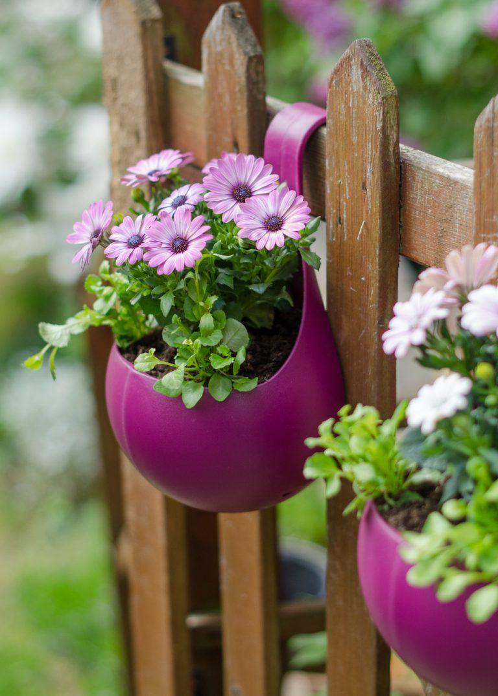 great gardening ideas with wilko flowers garden garden projects rh pinterest com