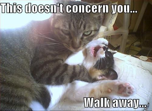Funny Cats Strangling Each Other Funny Animal Images Funny Animal Pictures Funny Cat Memes