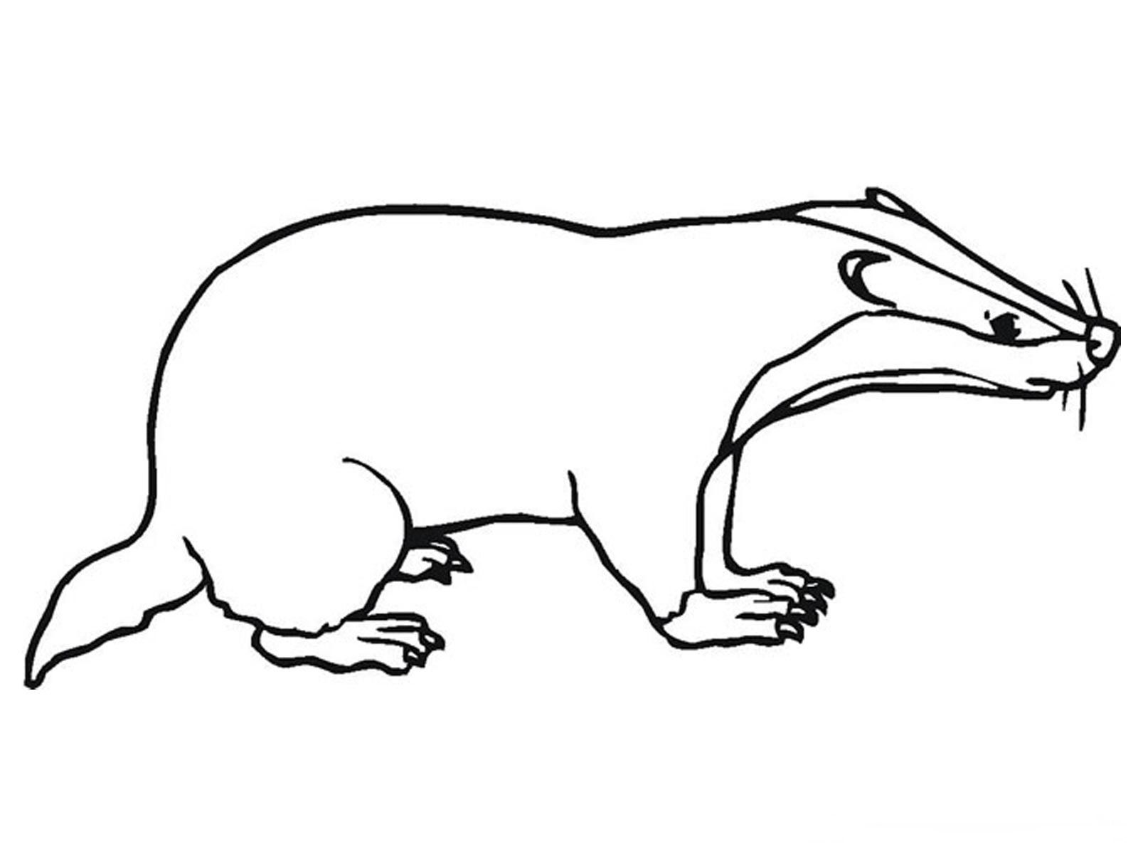 Badger Outline Printable Kids Coloring Pages Http Www Kidscp