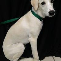 Pet Card Pets Animal Rescue Fort Wayne Indiana