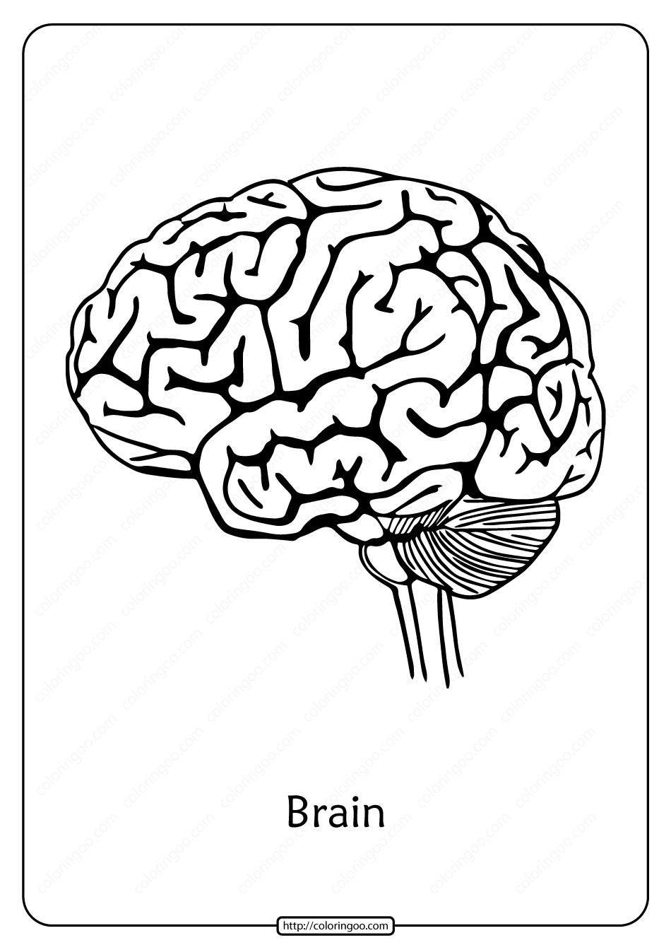 Free Printable Biology Outline Pdf Coloring Page Brain Art Drawing Brain Illustration Brain Drawing [ 1344 x 950 Pixel ]