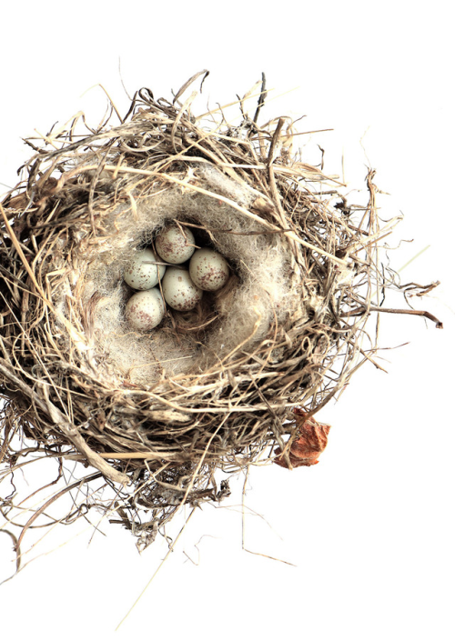 Random Beauty Rurallyyours Still Bird Nests Art Bird Nest Nest Art