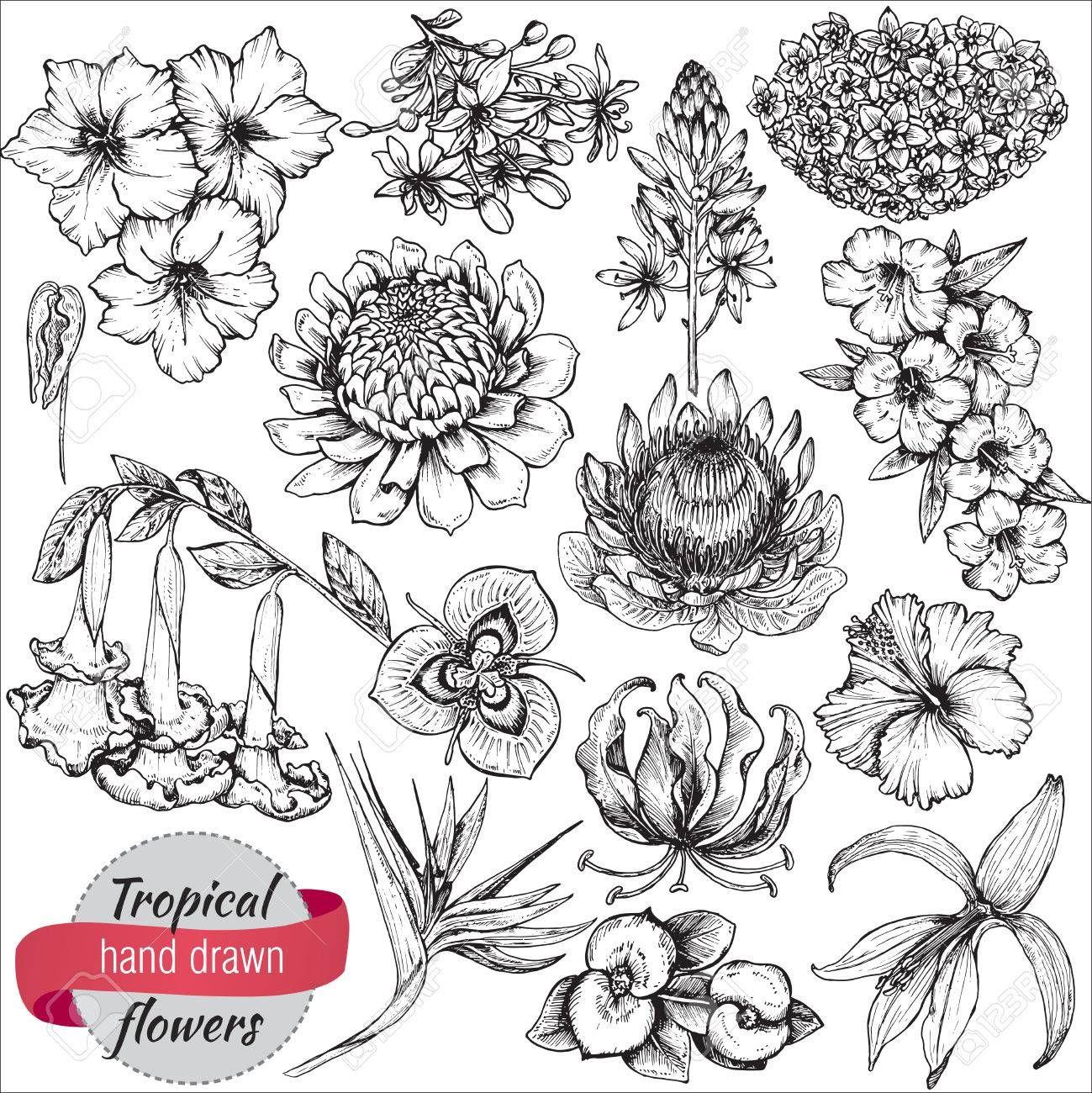Image Result For Tropical Flower Line Drawing Flower Line