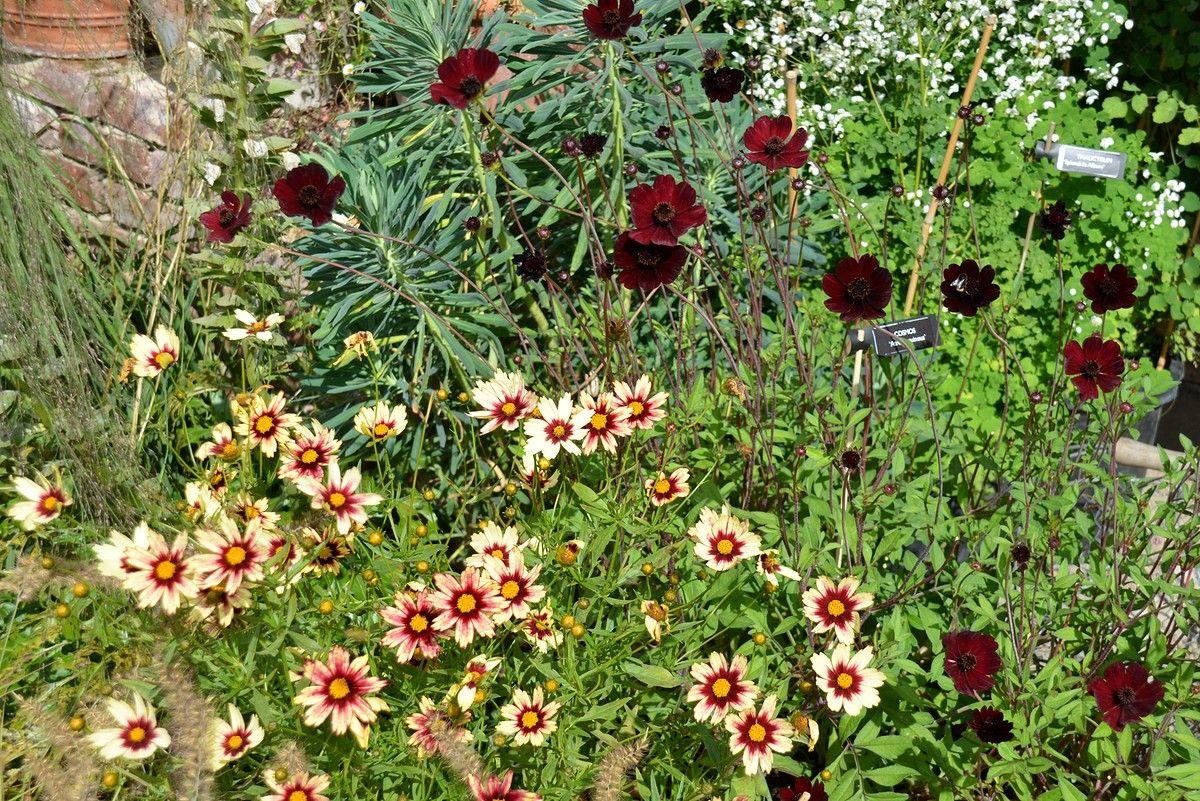 jardin plume jardin champ tre jardin anglais beau. Black Bedroom Furniture Sets. Home Design Ideas