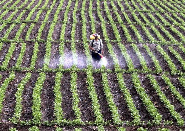 """Non sono buone le prospettive per i redditi agricoli nei prossimi dieci anni: """"il valore totale della produzione infatti, che al 2025 dovrebbe aumentare di oltre il 10%, non riuscirà a..."""