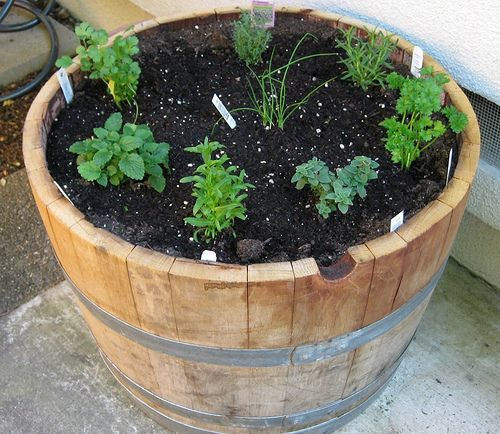 Half Wine Barrel Garden Always Wanted To Do A Herb Garden In A