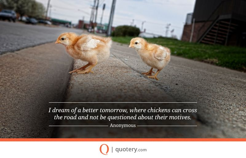 Quotes About Chickens: Quotes, Picture Quotes