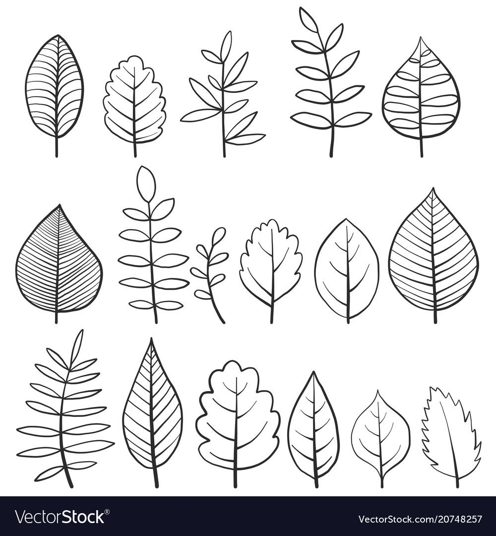 Set of doodle tree leaves vector image on VectorStock
