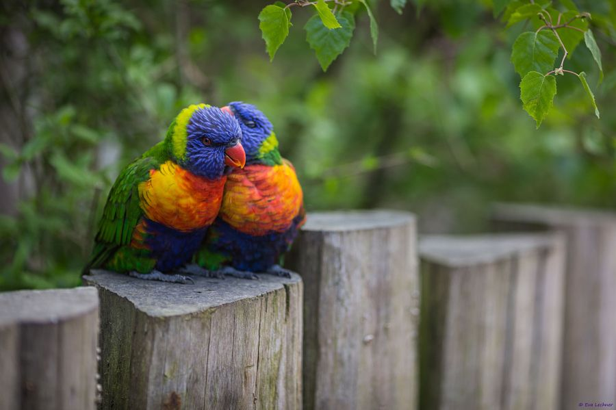 Lovers by Eva Lechner on 500px.com