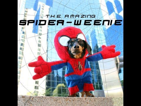 The Amazing Spider Weenie Youtube Spiderman Spiderdog
