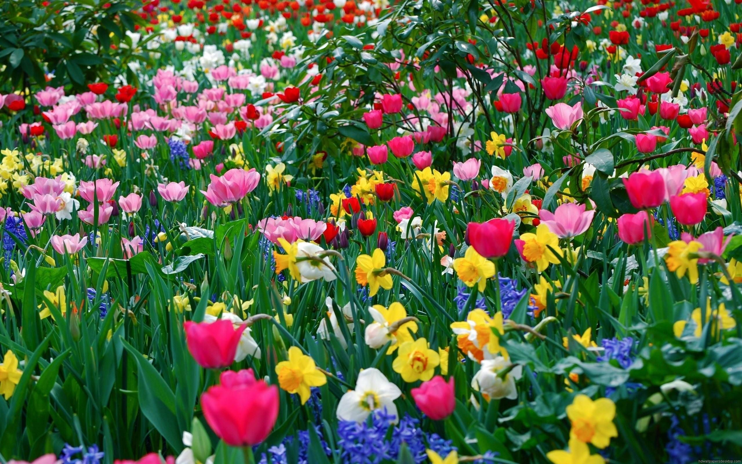 Flower Garden Wallpapers Hd Wallpapers Pinterest Floral