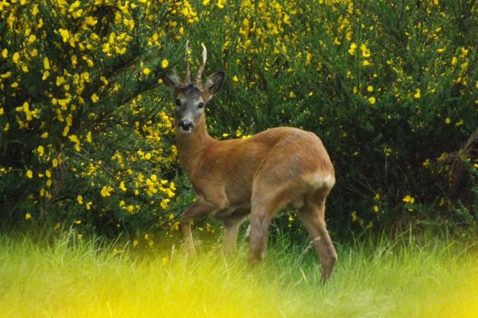 Love this deer!!