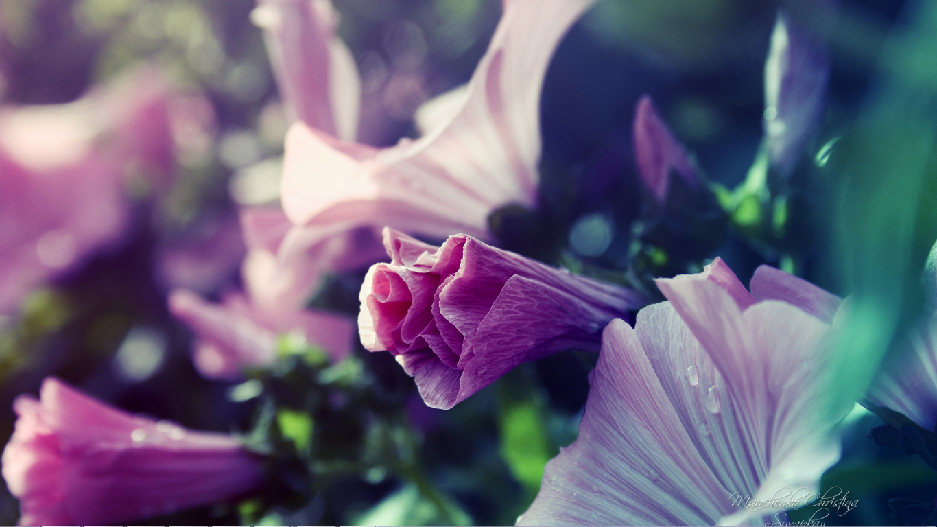 Amazing Photographs Of Microsoft Windows Themes Flowers Beautiful Flowers Windows Wallpaper