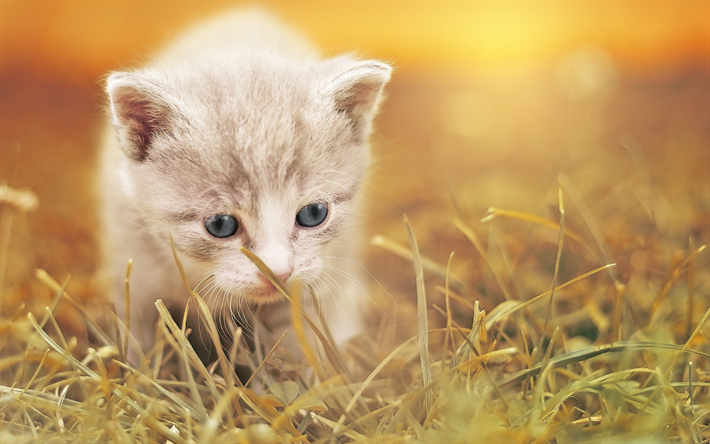 Download Wallpapers Small Fluffy Kitten Cute Animals Autumn White Kitten Cat Besthqwallpapers Com Cute Kittens Chats Adorables Animaux Les Plus Mignons