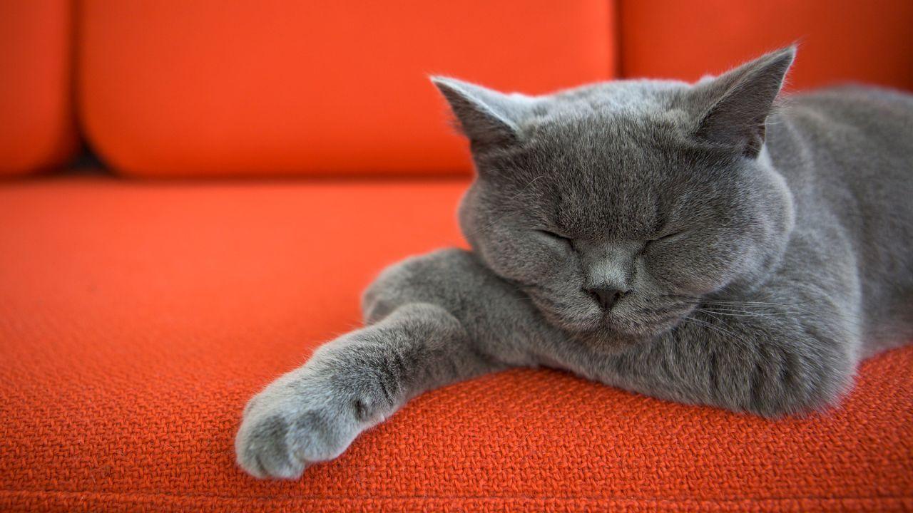 Cat Cute Horizontal Why Do Cats Purr Cat Purr Cats