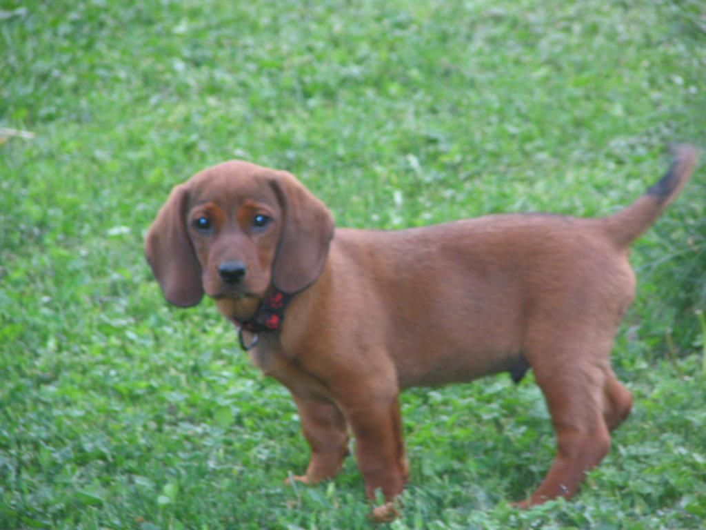 bassett chat sites Basset certification training for illinois for $1399  live chat now  phone:  312-814-2206 website url:   email address:.