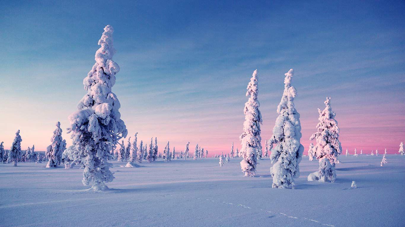 Winter Kakslauttanen Wilderness Retreat See The Northern Lights Winter Scenes