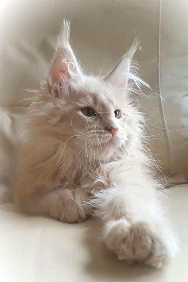 Pin Auf Niedlichen Katzen
