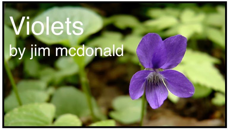 GREAT information on violets - benefits & uses (post by Jim McDonald)