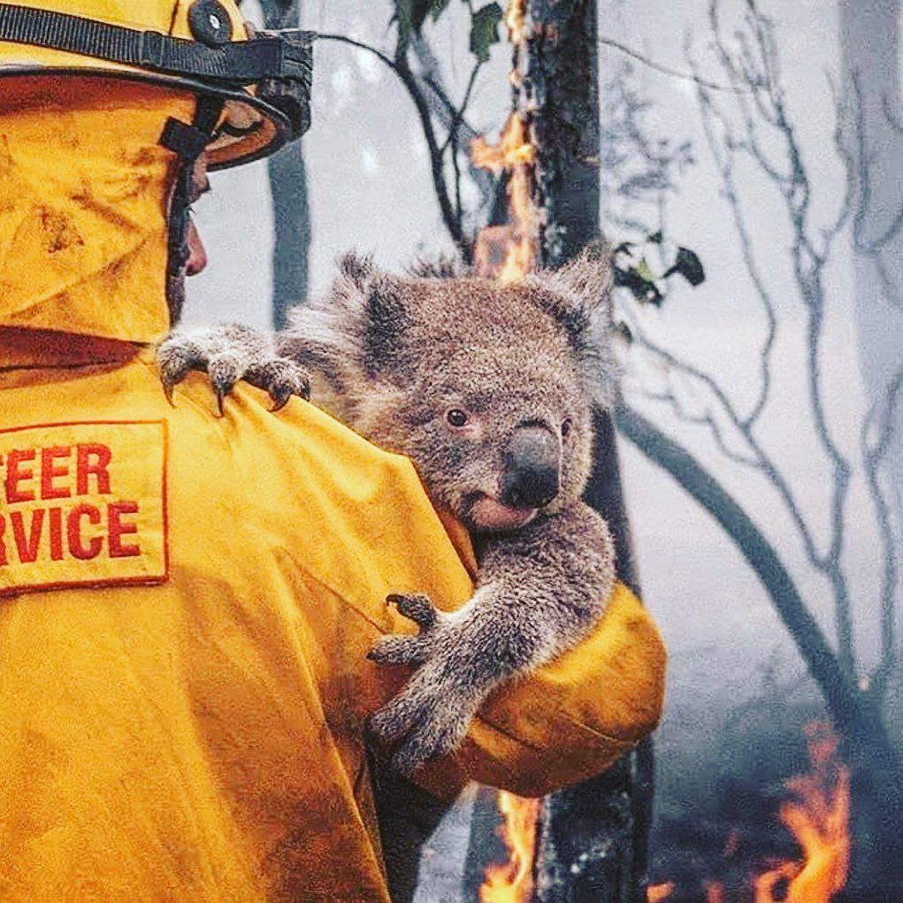 Justin Baldoni On Instagram My Calamity Is My Providence Outwardly It Is Fire And Vengeance But Inwardly It Is Light And Mercy In 2020 Koala Bear Koala Animals