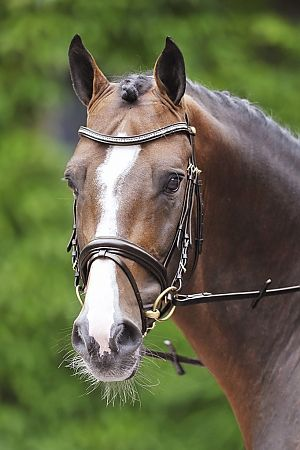 Schockemöhle Paris Bridle. Exquisite Dressage bridle made of finest leather, curved browband with squared diamonds.