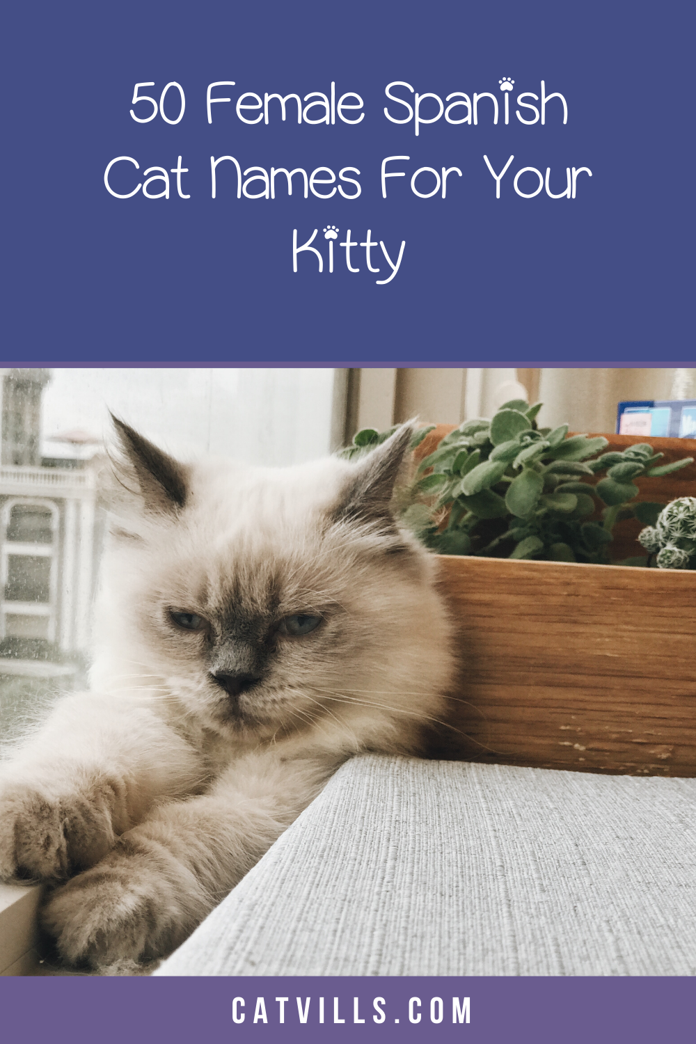 100 Spectacular Spanish Cat Names for Male & Female