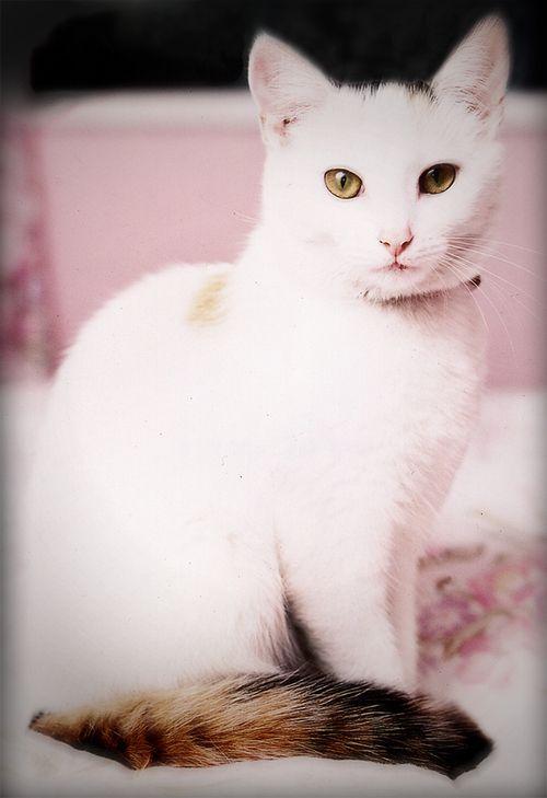 Lucy.....gorgeous, gorgeous, gorgeous!