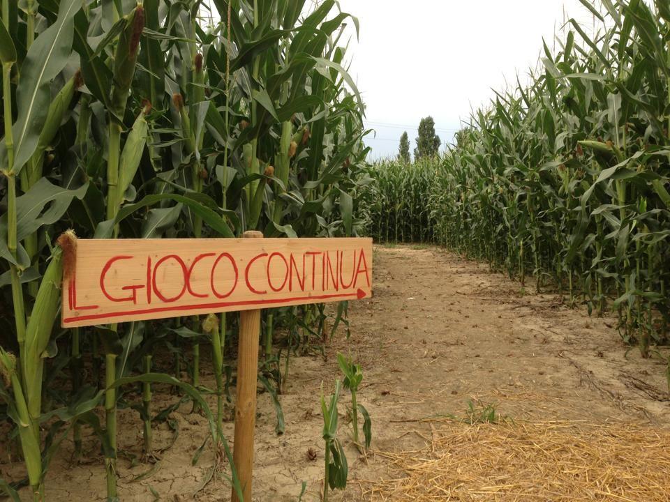 labirinto effimero nel mais. Labirinto realizzato da Hort a Senigallia nel 2014