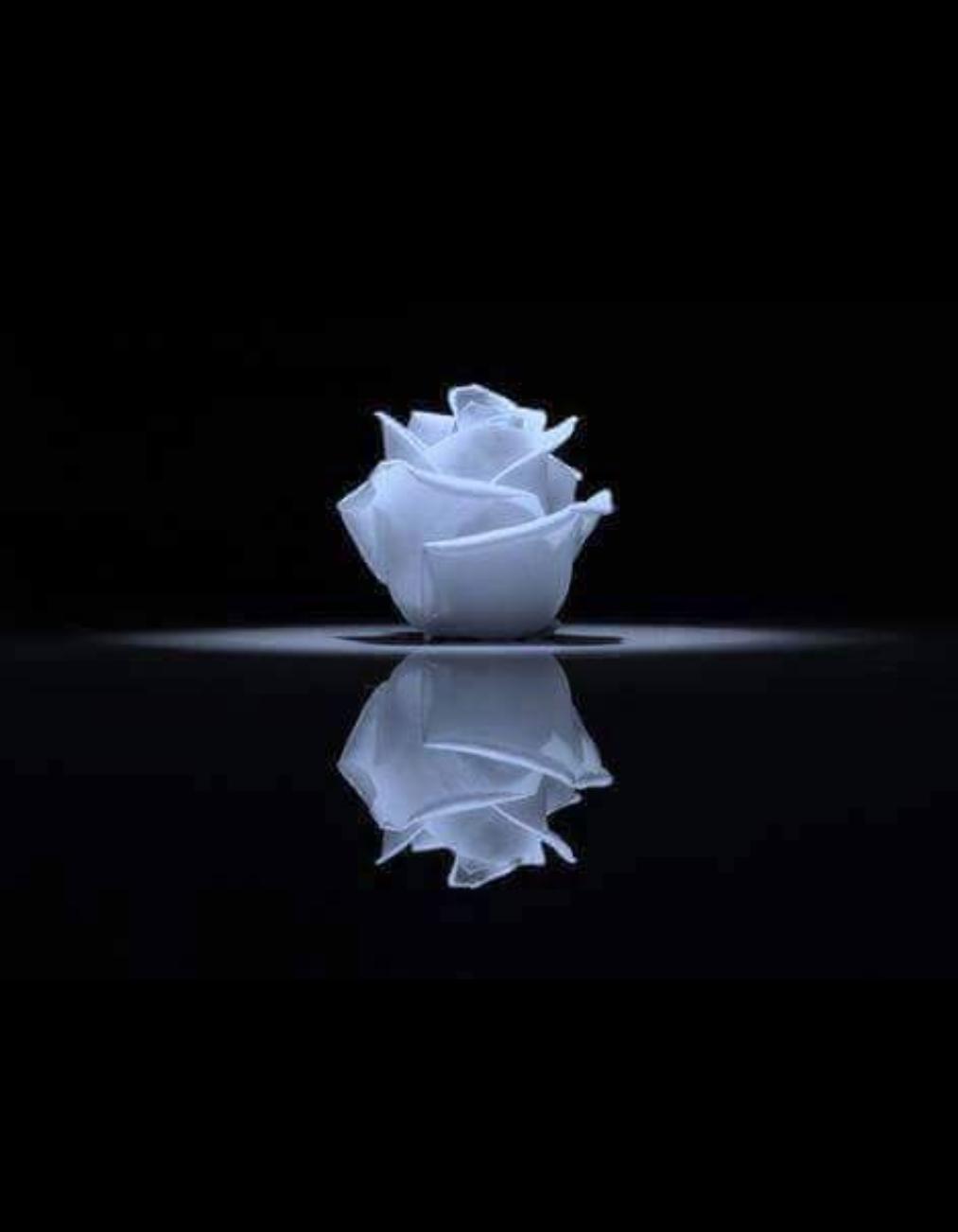 Nuit Bleue Fond Noir Et Blanc Papier Peint Rose Photographie Noir Et Blanc