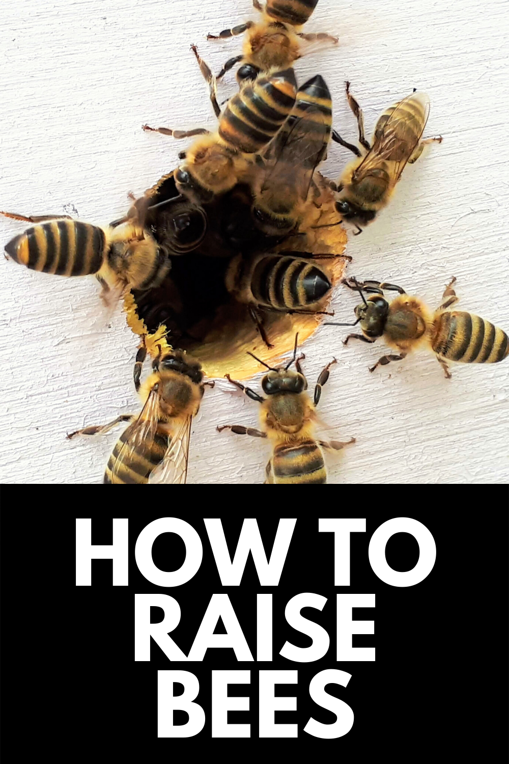 How To Raise Bees In Your Backyard A Beginners Guide 2021 Raising Bees Bee Backyard Animals