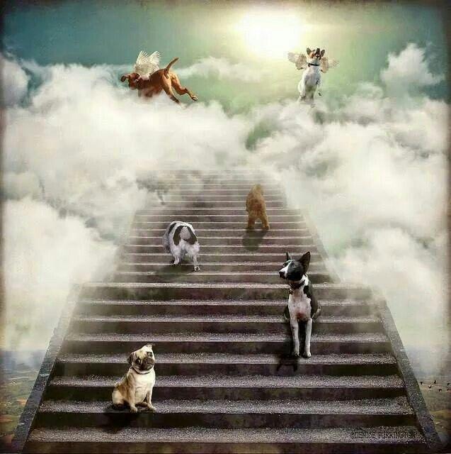 Regenboogbrug Dog Heaven Dog Love Baby Dogs