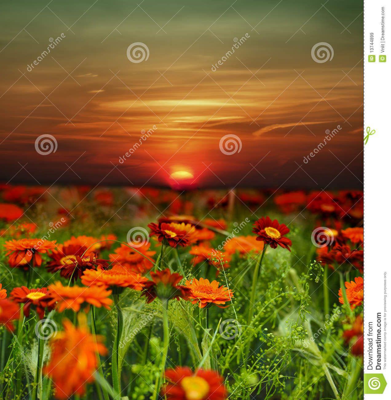 Gisement de fleur de coucher du soleil t l charger parmi - Heure du coucher de soleil aujourd hui ...