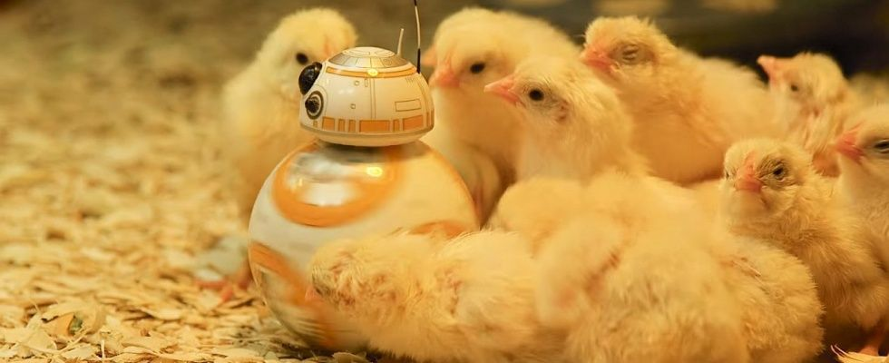 BB-8 has friends ->chicks
