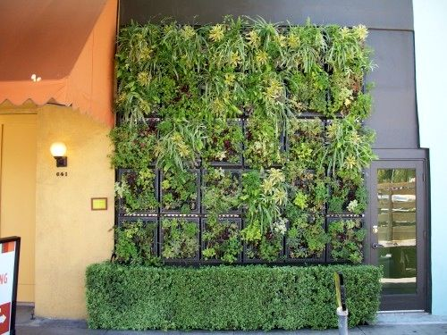 Edible Living Wall / Pizzeria Mozza / Lettuce / Peppermint / Celery /  Parsley / Sage / #biophilia #biophilic #living