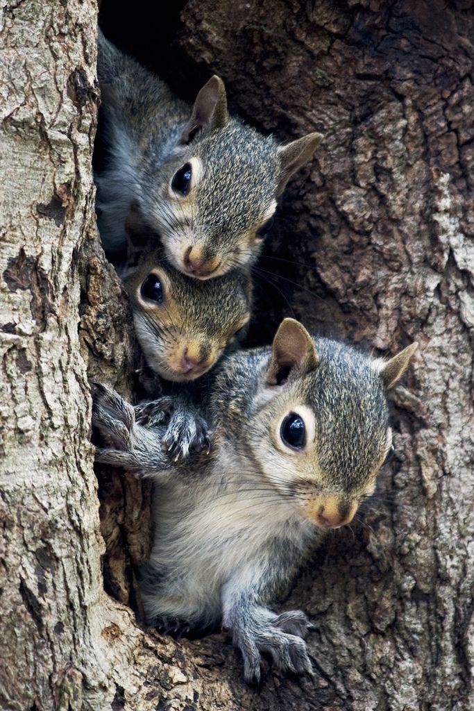 "gardenofgod: "" A Squirrel Family Tree, by George Holt. """