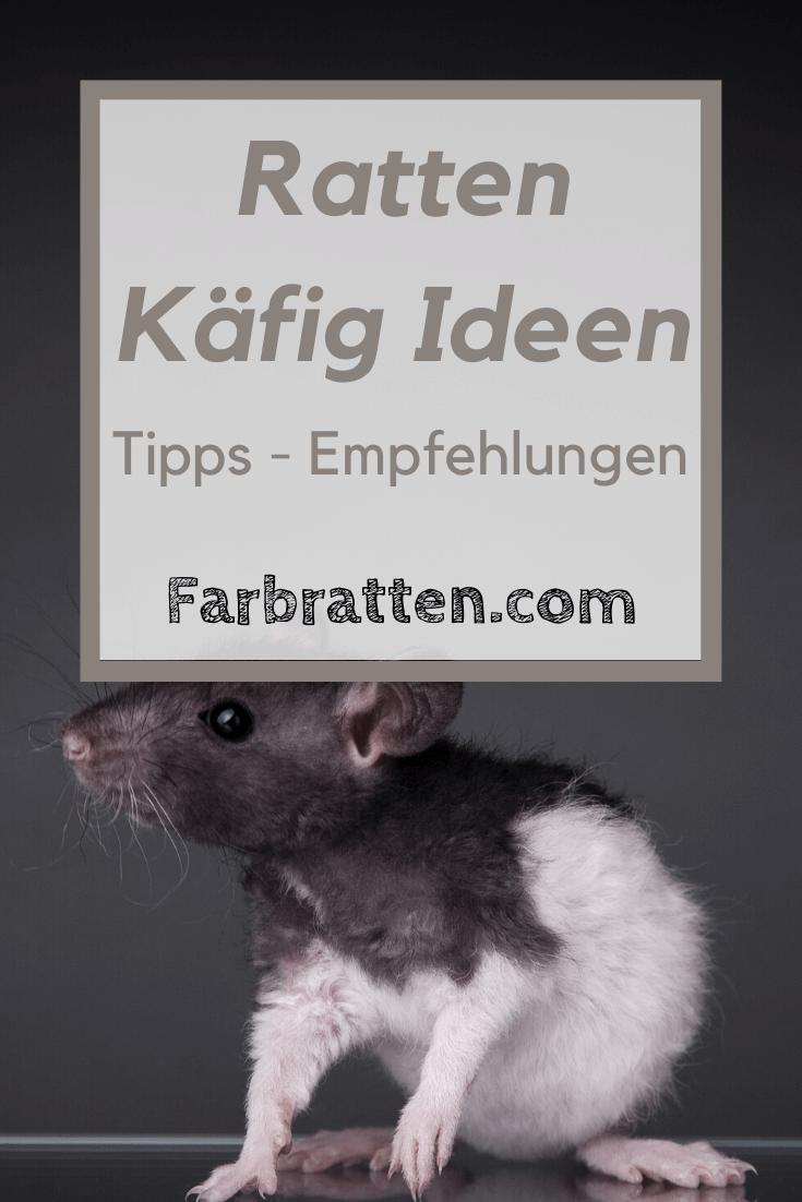 Der Perfekte Rattenkafig Anforderungen An Einen Rattenkafig In