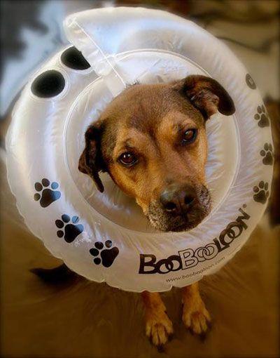 5 Alternatives To The Cone Of Shame Dog Cone Cone Of Shame Diy