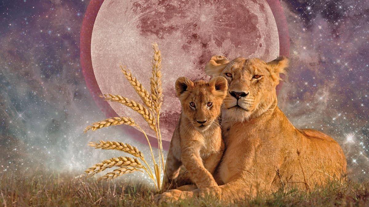 Los Días 8 Y 9 De Febrero Estaremos En La Luna Llena En Leo Algo Así Como La Culminación De Esta Lunación Que Comenzó El 24 De Enero Con L Luna Llena Leo Luna