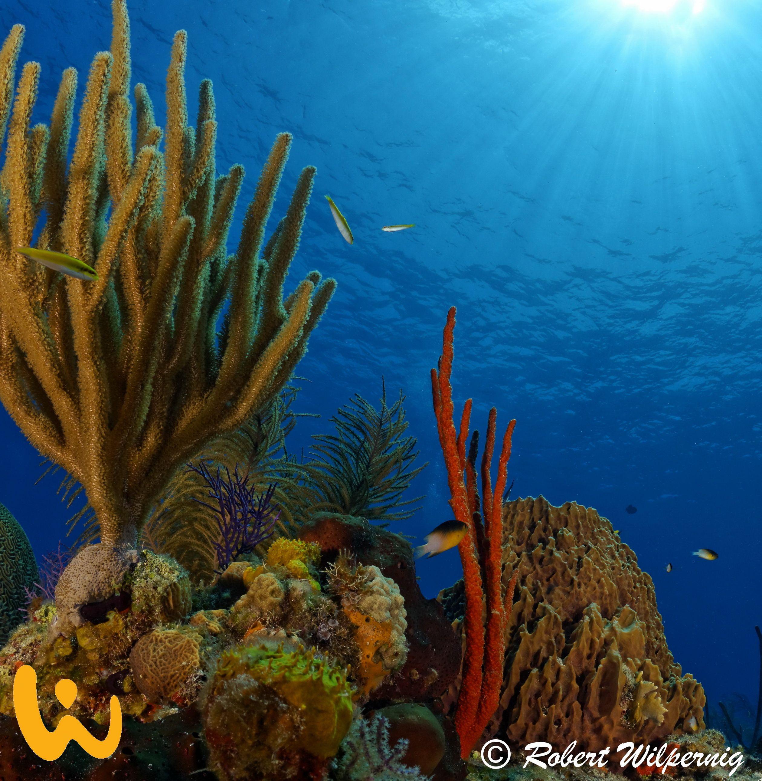 Bahamas unglaublich farbenfrohe Unterwasserwelt ♥ #bahamas ...