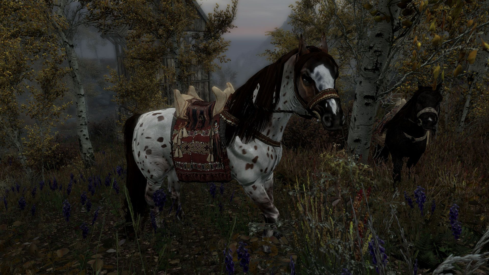 Tasheni Saddles Redguard Collection SSE at Skyrim Special