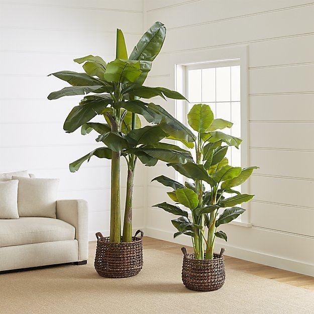 Faux Banana Plants Crate And Barrel Plant Decor Banana Plants Indoor Plants