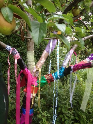 Someday when I have a yard, I want a ribbon tree. At least until it gets dirty and gross.