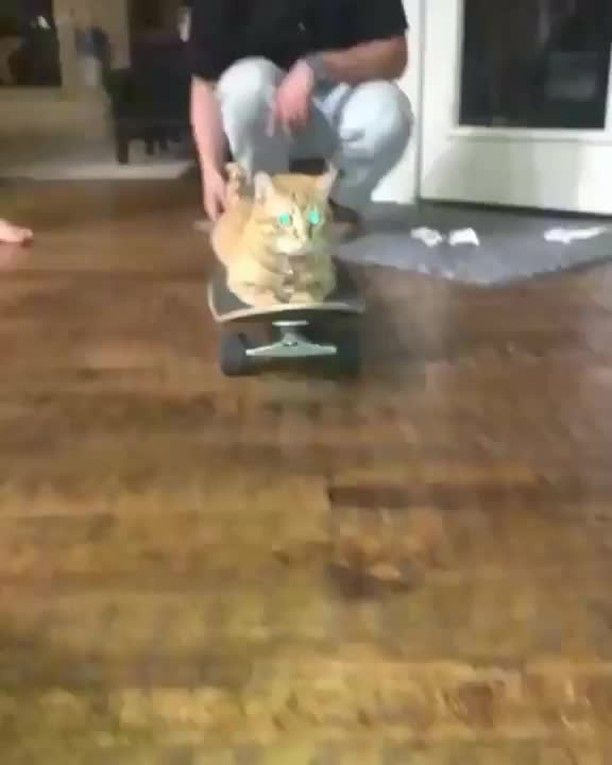 He skate 😎⠀ From:📽️ nash_the_cat1 Tiktok .⠀ .⠀ Follow us: @cats.didi 😍😍If you are a real cat lover⠀ .⠀ .⠀ .⠀ .⠀ .⠀ .⠀ .⠀ .⠀ .⠀ .⠀ .⠀ .⠀ #meowing  #pets #animals #animallover #catlovers #cats  #cute #cutest #cutekitten #cuteness #sweet #adorable #catsofinstagram #catsofworld #catsofig #catstagram #catsoftheday #cats_of_instagram #happycats #aww #talkingcat #meowing #meow ⠀