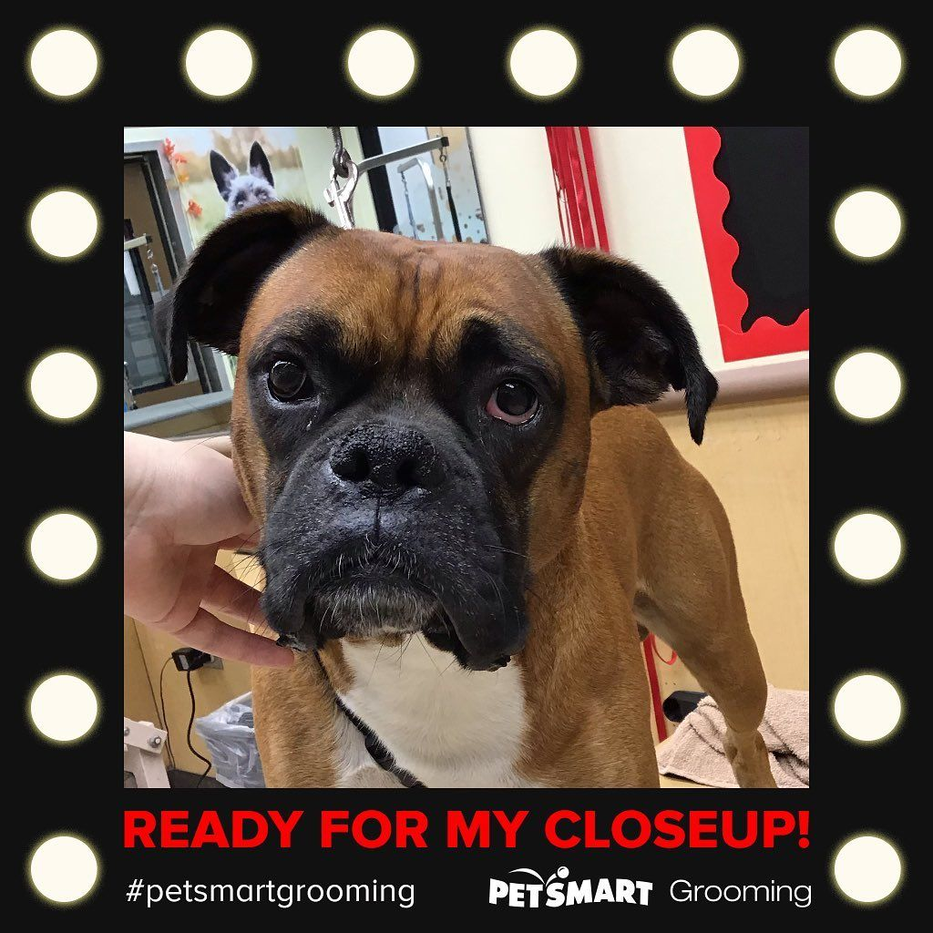 Petsmart Petsmartgrooming Petsmartgroomingsalon Groomingsalon Dogsofinstagram Doggrooming Petsmart Grooming Dogs Dog Breeds