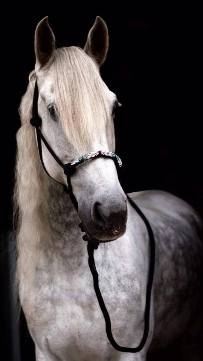 Luxury Black Freedom Feather Handmade Beaded Natural Horsemanship Parelli Rope Horse Halter Mini Draft Sizes Horses Horse Show Clothes Show Horses