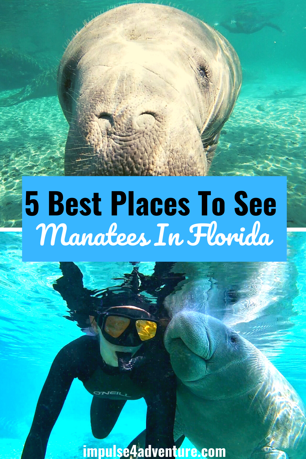 5 Best Places To See Manatees In Florida This Winter Manatee Places To See Florida